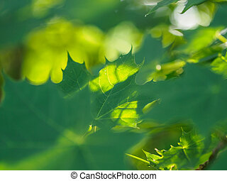 Green leaves crown in the morning light