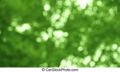 green leaves defocused with rain