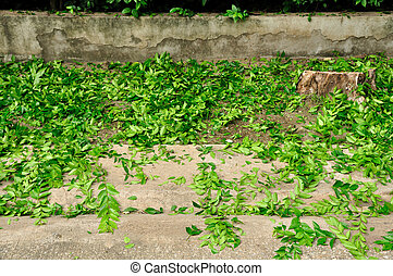 Green leaves falling on the street