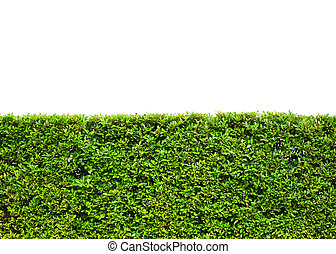 green leaves field on white background