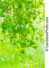 green leaves foliage at springtime outside in the nature