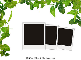 green leaves frame and tree blank photos