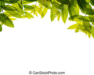 Green leaves frame, isolated on white.