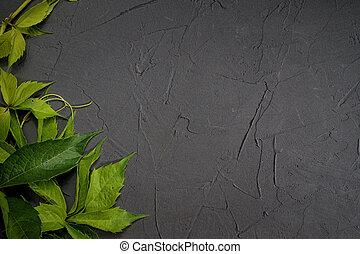 Green leaves frame on black plaster background