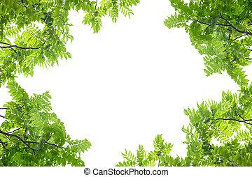 Green leaves frame on white background.