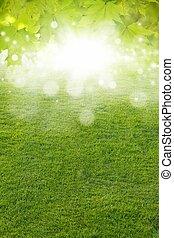 Green leaves, green field, bright sun