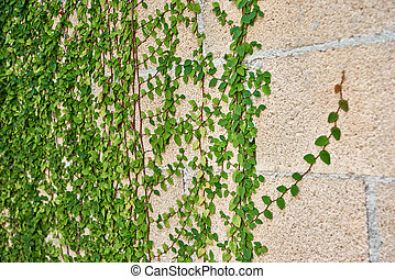Green leaves growing on a brick wall