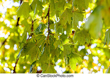 green leaves in autumn