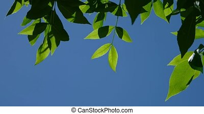 Green leaves in front of deep blue sky