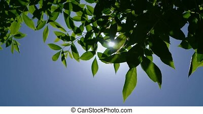Green leaves in front of deep blue sky with sunlight shining...
