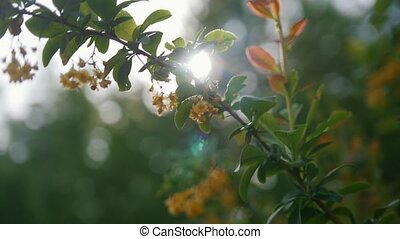 Green leaves in front of the sun - summer forest or park