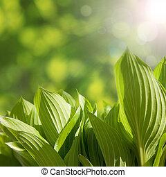 Green leaves in spring  sunny morning