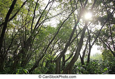 Green leaves in the forest with sunlight