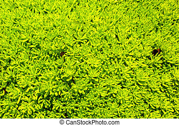 Green leaves in the garden - background