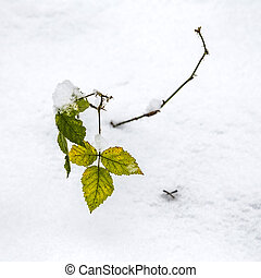green leaves in the snow covered forest