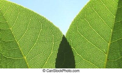Macro shot of green tree leaves in the sunshine