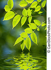 Green leaves in the water