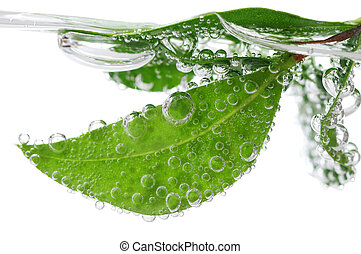 Green leaves of a plant submerged in water with air bubbles