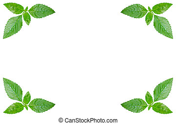 Green leaves isolated on white. Clippng paths included