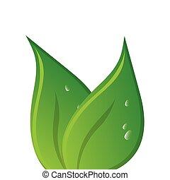green leaves leaf nature