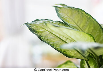 Green leaves of a home plant on a window background