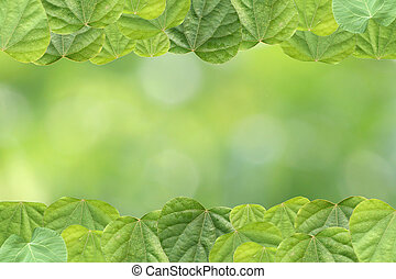 Green leaves of frame.