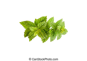 Green leaves of mint.
