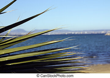green leaves of palm