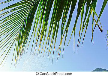 Green leaves of palm tree on sky background
