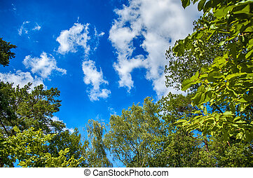 Green leaves of trees on blue sky