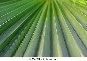 Green leaves of tropical palm, background, nature