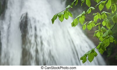 Green leaves on a background of a waterfall
