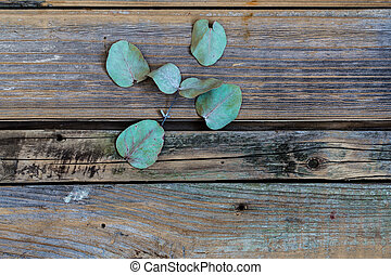 green leaves on a beautiful wooden background