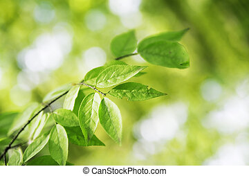 Green leaves on a branch close up
