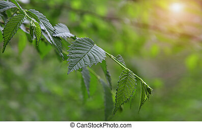 Green leaves on a branch in the forest.