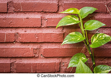 Green leaves on a brick wall