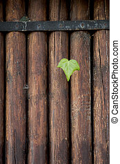 Green leaves on a brown wooden background