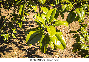 Green leaves on a bush in the spring