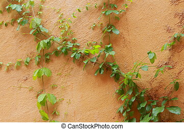 Green leaves on a orange wall