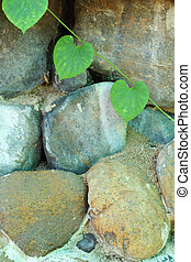 Green leaves on a stone wall.