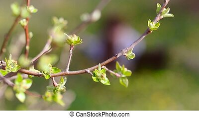 Green leaves on a tree branch in the spring