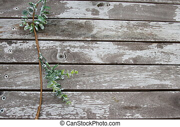 Green leaves on a wooden grunge background