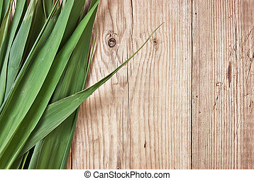 green leaves on a wooden wall