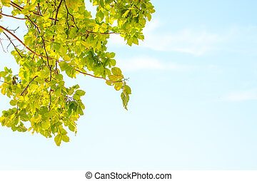 Green leaves on background
