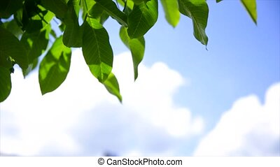 Green leaves on blue sky background.