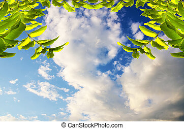 green leaves  on blue sky
