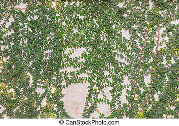 green leaves on cement wall textured for background
