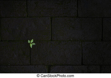 green leaves on dark red brick