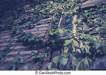 Green leaves on old brick wall vintage style