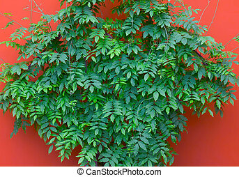 green leaves on orange wall